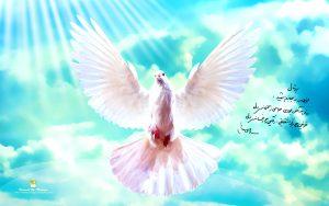 عشق است به آسمان پریدن